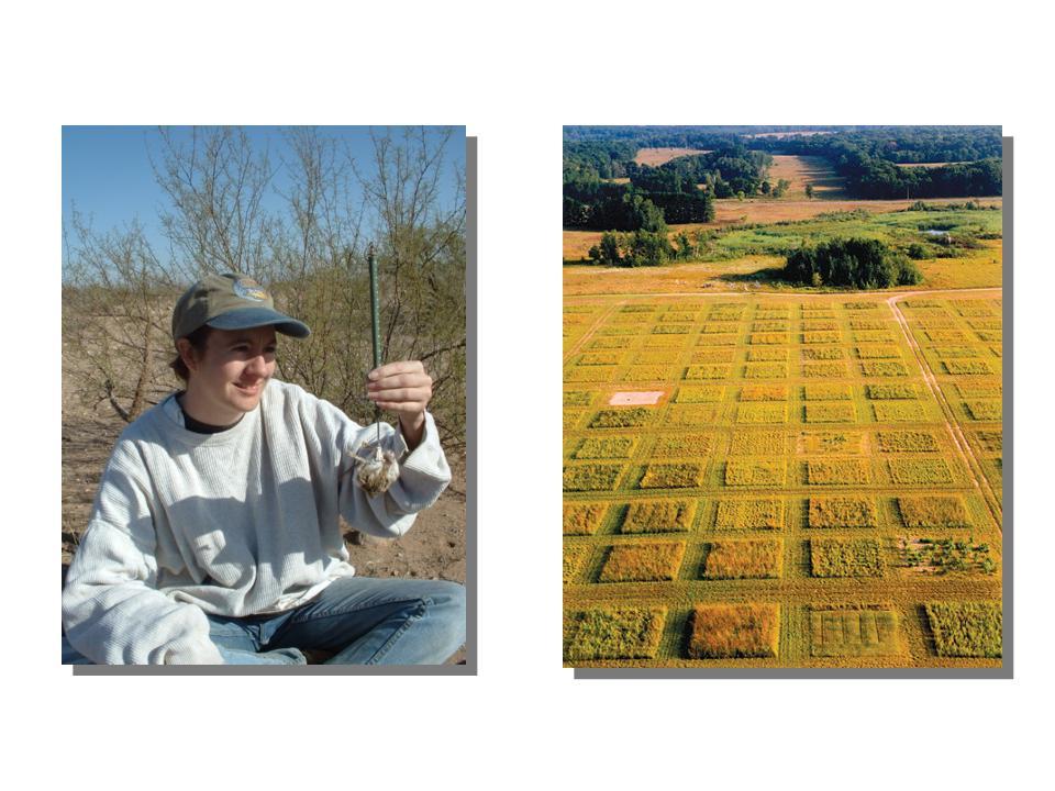 Photos of field work