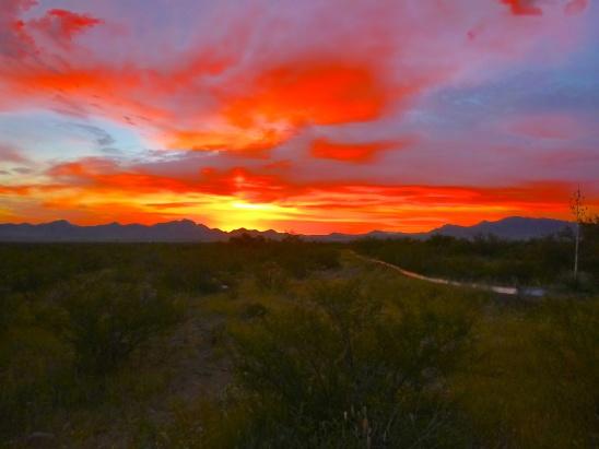Sunset in the desert jungle