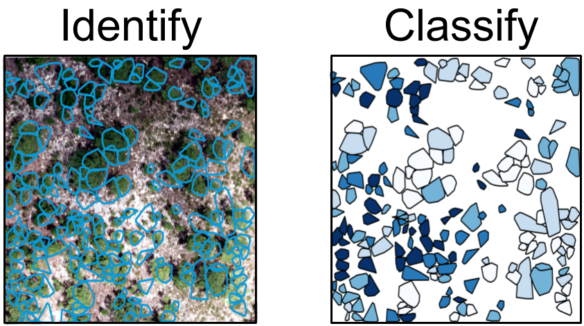 Panel 1: Identify - RGB image of trees from above showing trees outlined by blue polygons. Panel 2: Classify - polygons from Panel 1 color coded by species identity